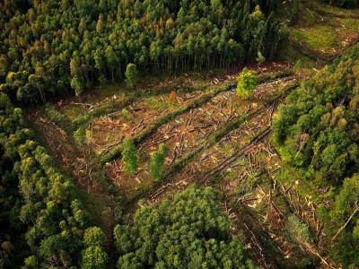 Waldrodung - Luftbild