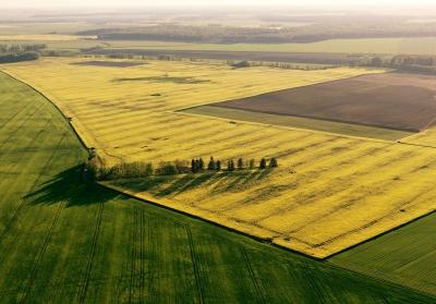 Rapsfeld - Luftbild