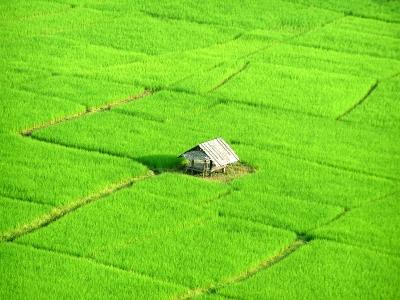 Reisfeld in Nord-Thailand