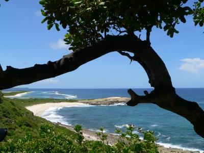 Küste Guadeloupe