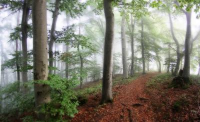 Noch träumt der Wald