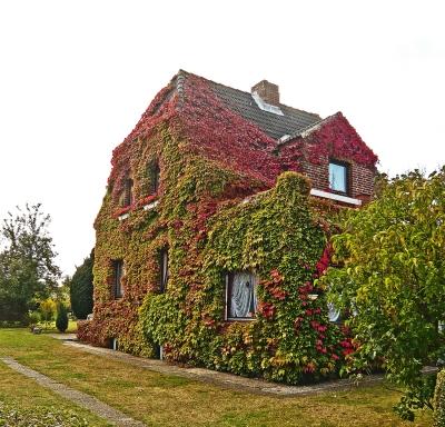 Haus im Herbstkleid