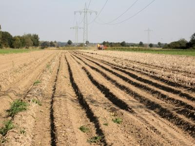 Kartoffelernte-02