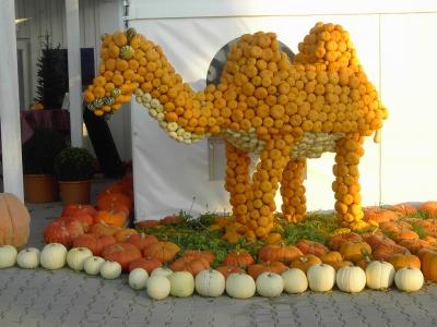 Kamel aus Kürbissen-Bohrerhof