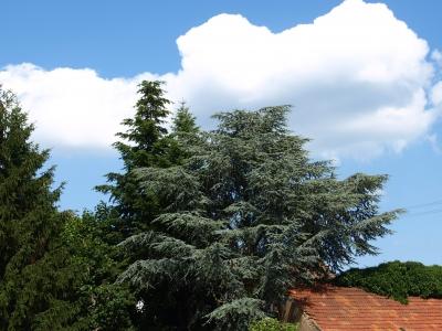 Baum und himmelblau