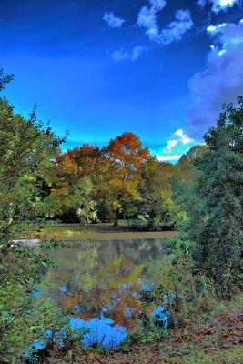 bunter Herbstbaum - HDR