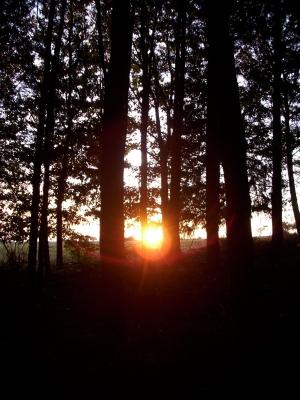 Sonne zwischen den Bäumen...