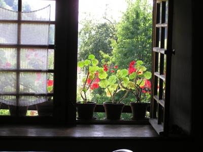 Fenster mit Geranien