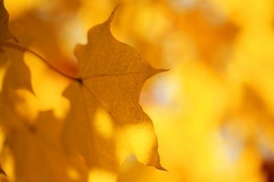 leuchtend gelbe Blätterwelt