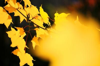 leuchtend gelbe Blätterwelt 2