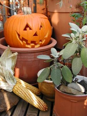 Herbstlicher Halloweenkürbis