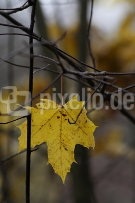 Das gelbe Blatt