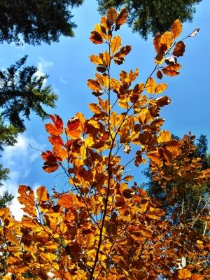 Herbst Laub Baum