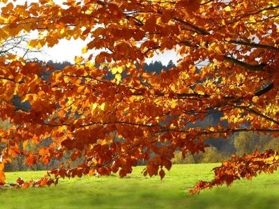 Blick durch leuchtende Herbstzweige