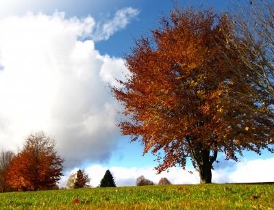 Herbstfarben pur 2