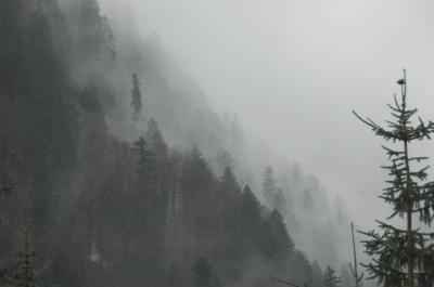 Regenwald 1.0