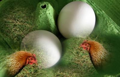 Eier-Produzenten