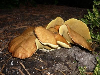 Später Pilzfund im Garten