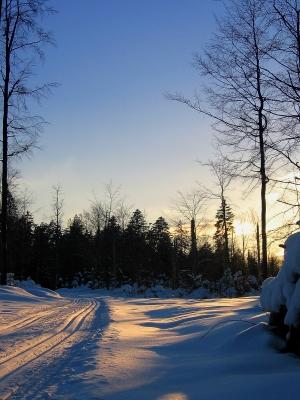Loipe im abendlichen Winterwald