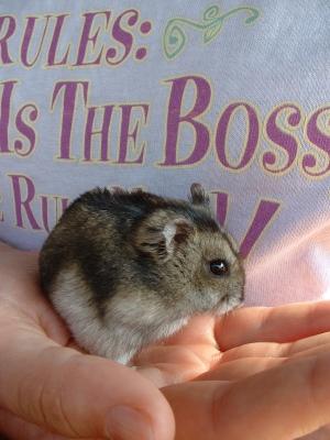 Hamster ist der Boss :0)