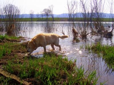 Herrliches Hundeleben - ein Abend am Fluss