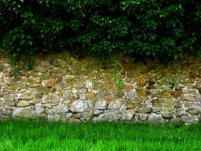 Alte Burgmauer zwischen Gras und Zweigen