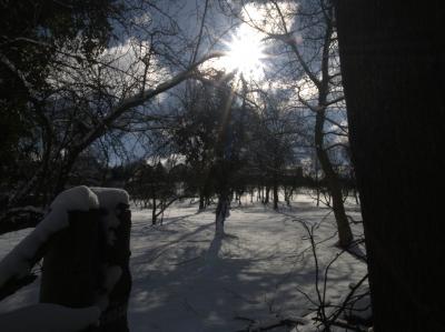 Winterimpression im sonnengefluteten Wald