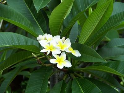 Australische Blüten