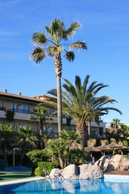 Swimmingpool mit Palmen