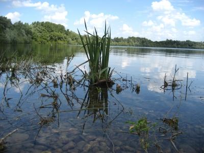 Uferlandschaft (Wesel)