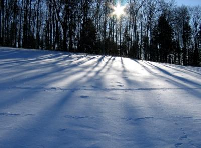 Wintersonne zwischen den Bäumen
