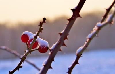 Drei Beeren ist kalt