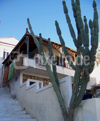 Samos, Kaktus an Treppe