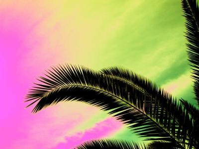 Palmwedel mit Farbenspiel