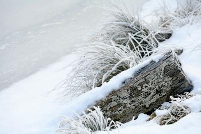 Frostig am Weiher