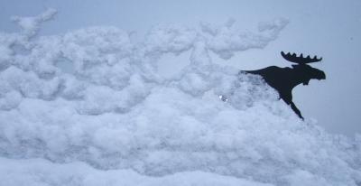 Elch aus dem Schnee