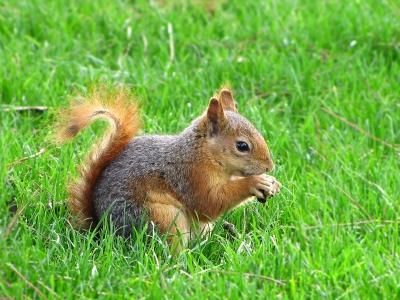 Fotogene Eichhörnchen-Haltung