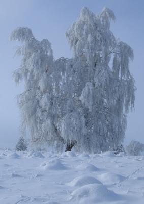 Wintererscheinung