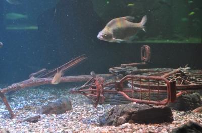 Fisch und Fahrrad...