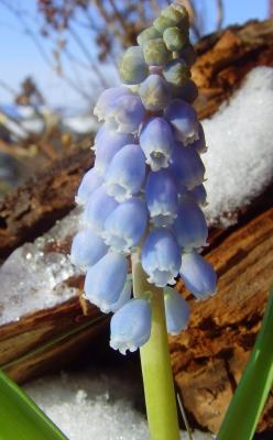 Es wird Frühling auf Balkonien
