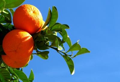 Südfrüchte 1