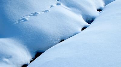 Harter Winter für Tiere