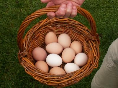 100% Bio-Eier