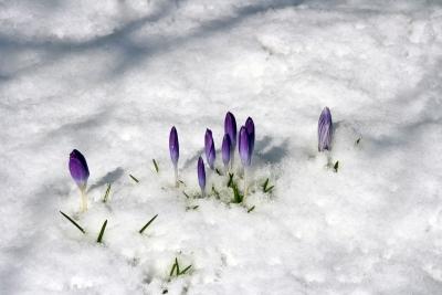 Schnee - Intermezzo