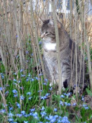 Kater im Frühling