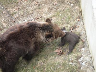Nachwuchs im Bärenpark 1