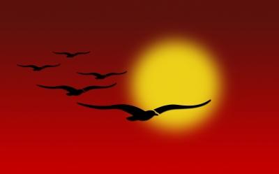 Vögel vor Sonne