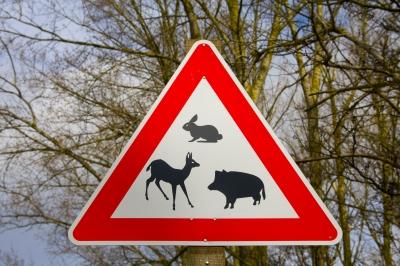 Straßenschild Wildwechsel
