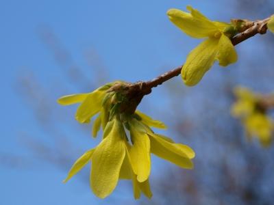 eindeutig Frühling . . . !