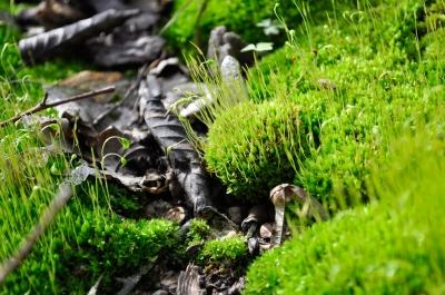 Stilleben auf dem Waldboden
